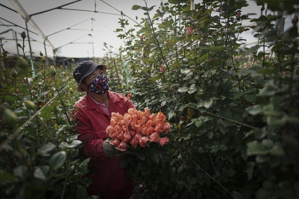 کارآفرینی از یک گلدان تا گلخانه؛ یک گل هم دلار میدهد