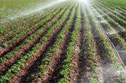 اقتصاد کشاورزی دشت اردبیل در حال تحول است/ کشت ۸ گونه غلات دانهریز
