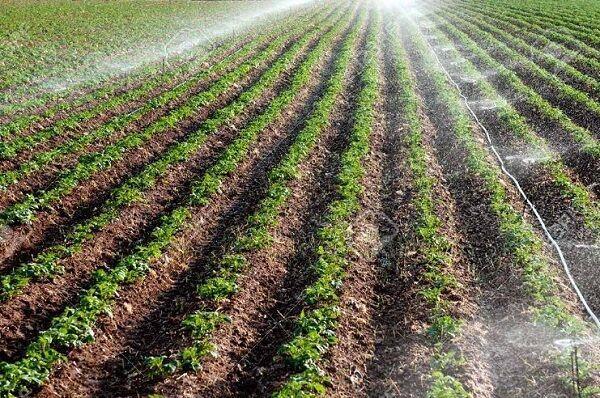 میزان اراضی کشاورزی آبی ایلام ۲ برابر افزایش یافت