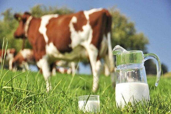 تعیین تکلیف قیمت شیر در جلسه کمیسیون کشاورزی