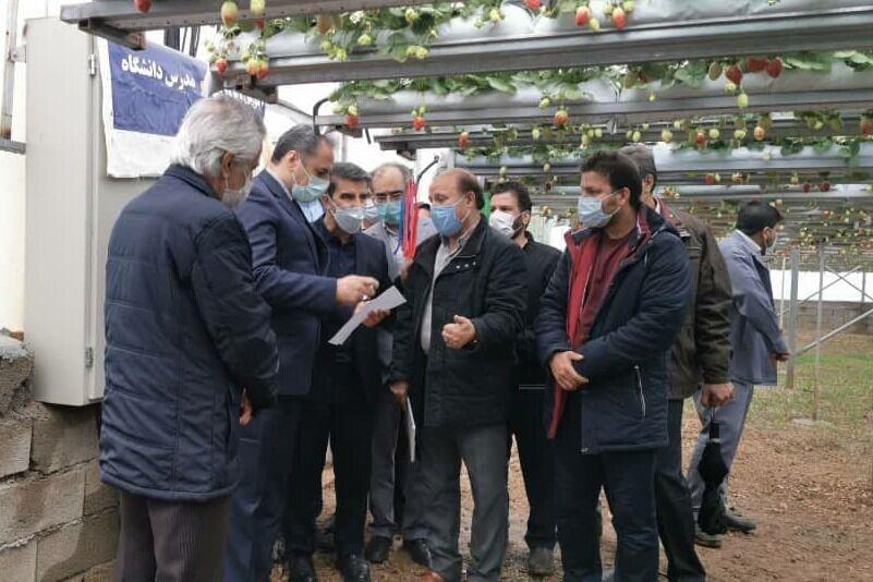 بهره برداری از ۲ واحد گلخانه ای در کرمانشاه آغاز شد