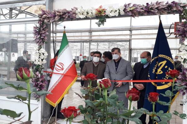 ارز آوری ۱۰ میلیون یورویی در پیشوا؛ ۳ میلیون شاخه گل صادر می کنیم