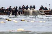 افزایش ۶ درصدی ماهیان استخوانی در گیلان