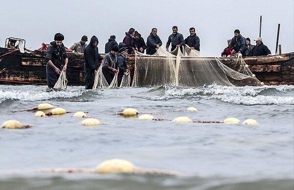صید ۳۰ هزار تن ماهیان صنعتی در آب های دور
