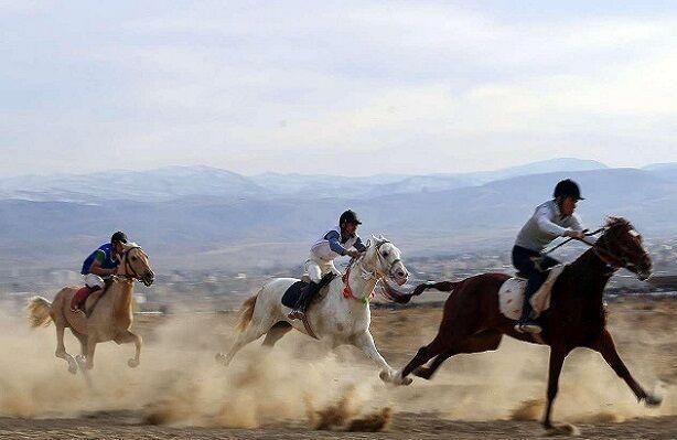 فقر زیرساختی مشکل صنعت پرورش اسب ترکمن؛ ظرفیتهای خراسان شمالی شناخته نشده است