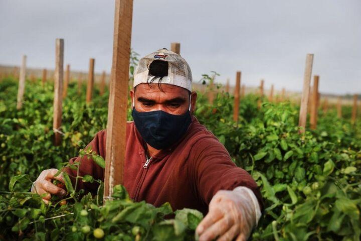 کشاورزی در فلوریدا 3