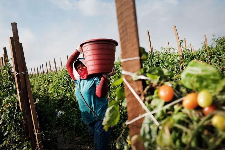 کشاورزی در فلوریدا 4