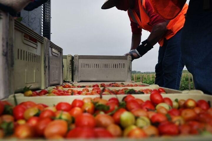کشاورزی در فلوریدا 5