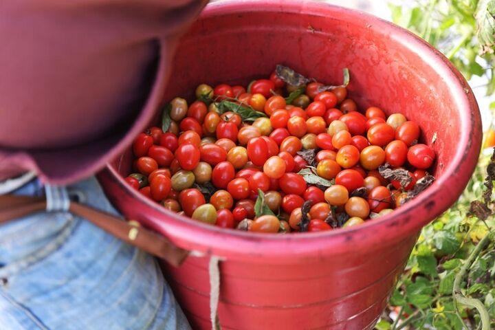 کشاورزی در فلوریدا 6