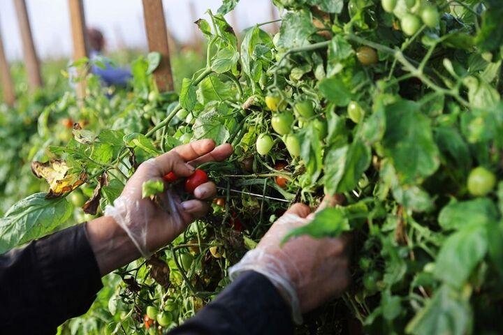 کشاورزی در فلوریدا 8