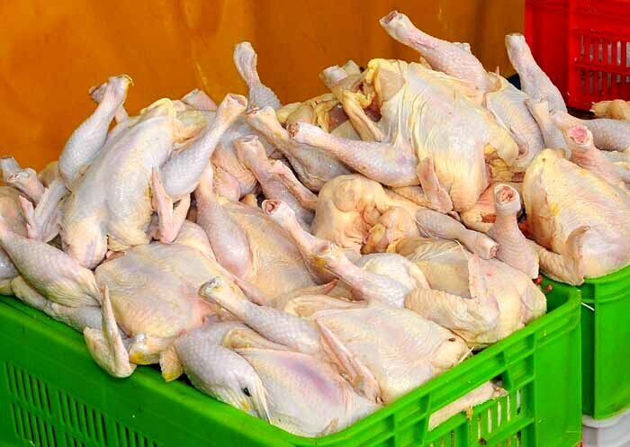 روزانه ۳۰۰ تن مرغ گرم در مازندران توزیع می شود