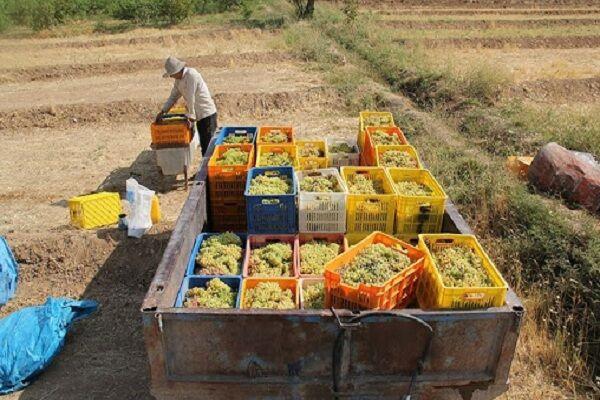 فرآوری و صنایع تبدیلی نجاتگر اقتصاد کشاورزی همدان