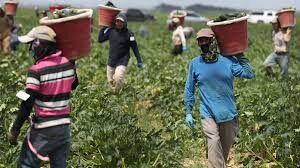 رشد مداوم قیمت محصولات کشاورزی و غذایی طی یک سال اخیر