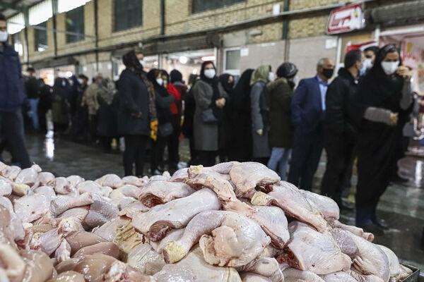 سهمیه دان مرغداران یک کیلوگرم افزایش یافت| احتمال تک نرخی شدن قیمت مرغ در ماه رمضان