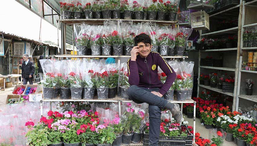 کرونا طراوت بازار گل را گرفت؛ گلهای آپارتمانی سر به فلک کشید