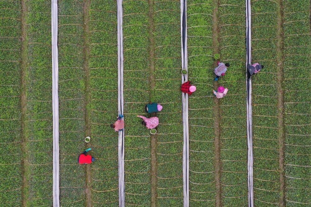ایران؛ هشتمین تولیدکننده محصولات کشاورزی| ترکیه بعد از دو قدرت جهانی