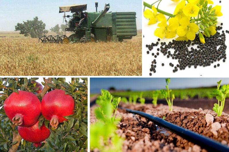 درخواست اعتبار ۱۰۰ میلیاردی برای بخش کشاورزی خراسان جنوبی
