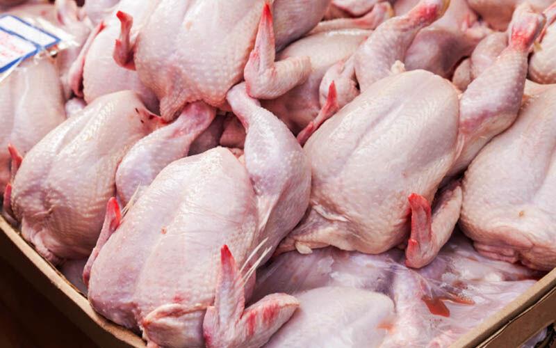 مرغ در کشور فقط یک قیمت دارد/ هر کیلو ۲۴ هزار و ۹۰۰ تومان