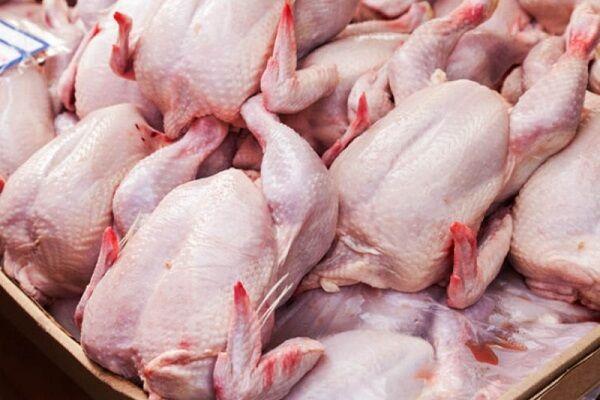 فراوانی مرغ در بازار اصفهان/ «رهتاب» گره گشای بحران میشود