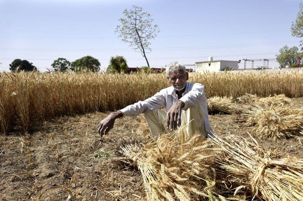 بی تدبیری به قاچاق گندم دامن زد| گلایه شدید کشاورزان کرمانی از قیمت گذاری