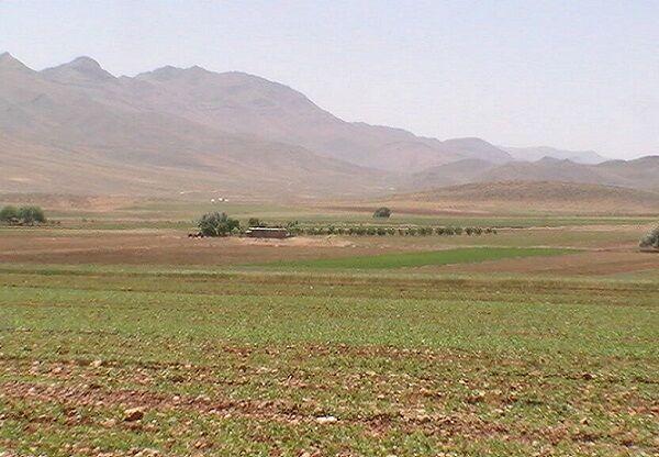 ۳ هزار هکتار از زمینهای کشاورزی سیستان و بلوچستان زیر کشت جو رفت