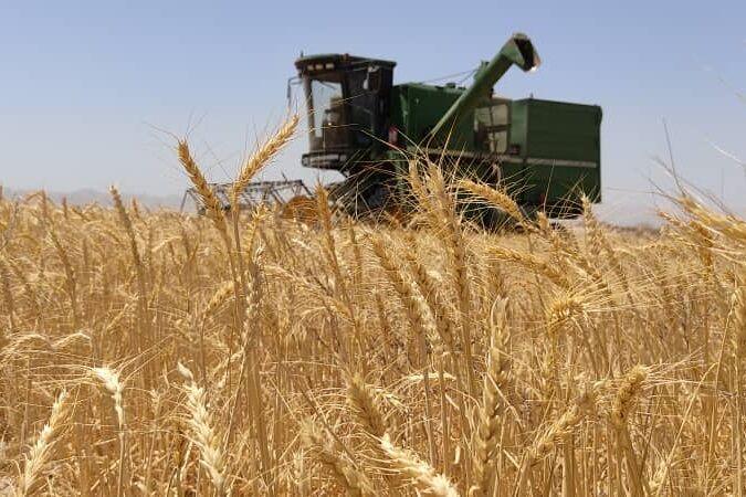 برنامهریزی برای خرید تضمینی گندم در استان سمنان؛ تلاش برای همراه کردن کشاورزان