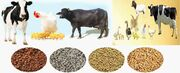 رشد ۷ درصدی بازار جهانی پروبیوتیک های خوراک دام تا ۱۰ سال آینده