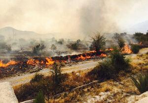 آتشسوزی ۵۱ میلیارد ریال به کشاورزان سیاهو بندرعباس خسارت وارد کرد