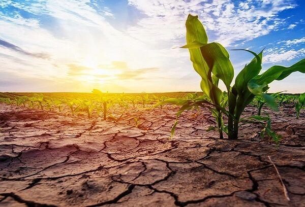 مصرف ۲ برابری سهمیه آب توسط کشاورزان قزوینی  الگوی کشت رعایت نمیشود