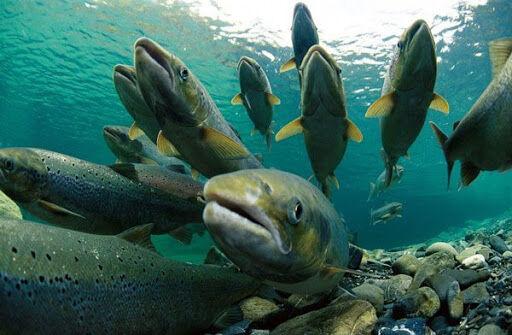 شاغلان صنعت ماهیان سردابی، قربانی منفعت طلبی عده ای