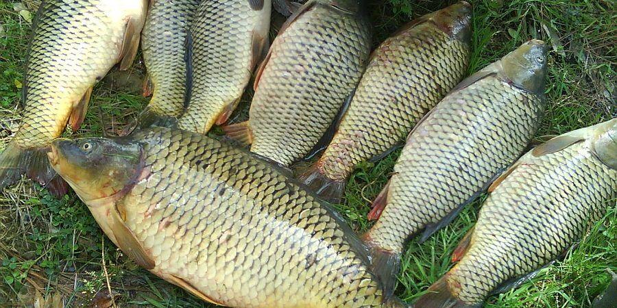 تولیدات ماهی گرم آبی سال قبل به فروش نرفت