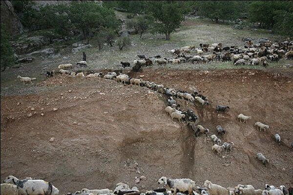 کوچ عشایر همدان در مسیر مشکلات؛ ۱۰۰ درصد ایل راهها تخریب شده است