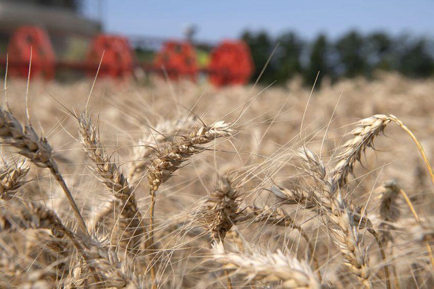 ۳ هزار تن گندم بذری از کشاورزان سیستان و بلوچستان خریداری می شود