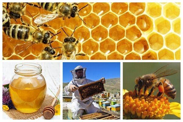 گرانی مواد اولیه چرخ تولید عسل را در همدان پنچر کرد/ افزایش ۷۰ درصدی قیمت کندو