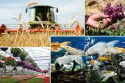 کشاورزی مازندران نیازمند ۲.۴ میلیارد مترمکعب آب است