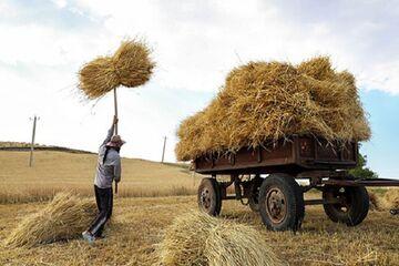 خطر قاچاق گندم به کشورهای همسایه؛ اختلاف قیمت ۲برابری بازار دلالی را داغ میکند