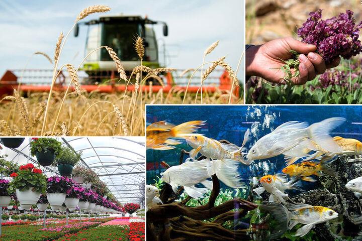 افزایش ۱۰ درصدی اشتغال جدید در بخش کشاورزی شیراز ثبت شد