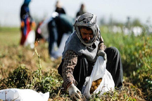 پیشبینی خسارت ۲۰ میلیارد تومانی به حوزه کشاورزی لرستان