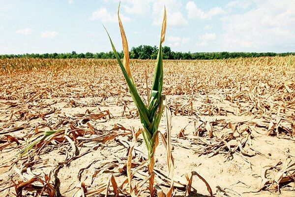 خشکسالی ۲۶۴ میلیارد تومان به کشاورزی استان همدان خسارت زد