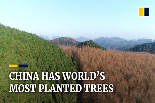 چین، کشوری به رنگ سبز