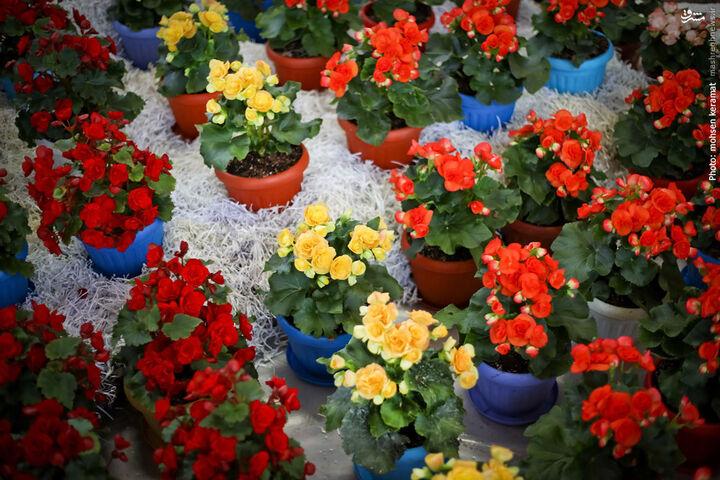 سهم ناچیز ایران از بازار جهانی ۲۰۰ میلیارد دلاری گل و گیاهان زینتی