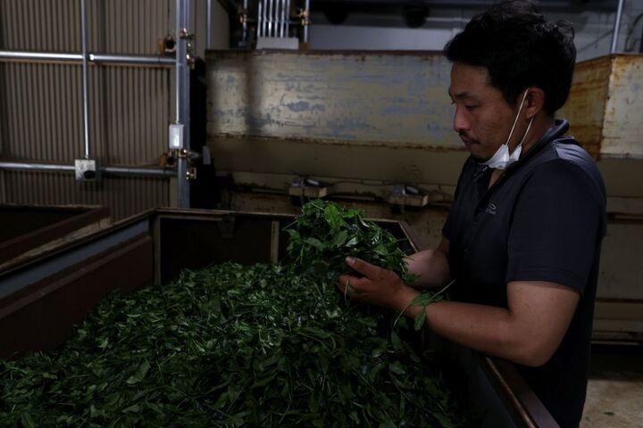 چای سبز 6