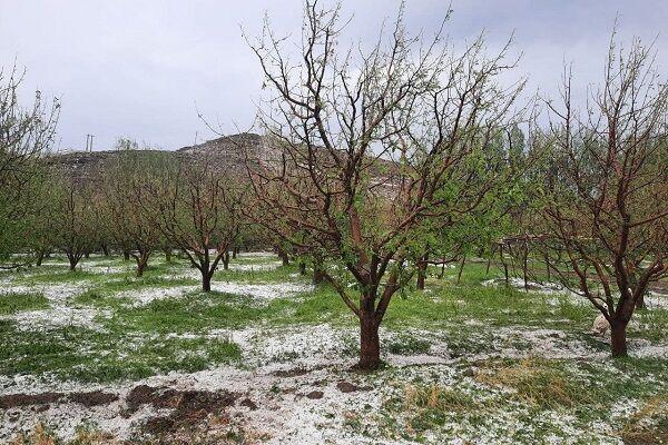 سیل و تگرگ ۲۵۵ میلیارد تومان خسارت به روستاهای اهر وارد کرد