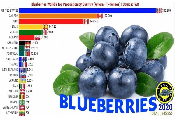 کشورهای تولیدکننده بلوبری را بشناسید