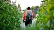سموم غیرمجازی که زهر محصولات باغی است؛ از بین رفتن ۴۰۰ درخت هلو بر اثر تقلبی بودن سموم در ملایر