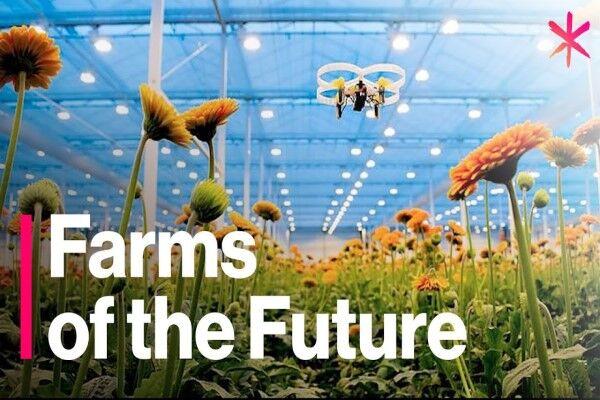 امنیت سیستم غذایی جهان در گرو تولید پایدار