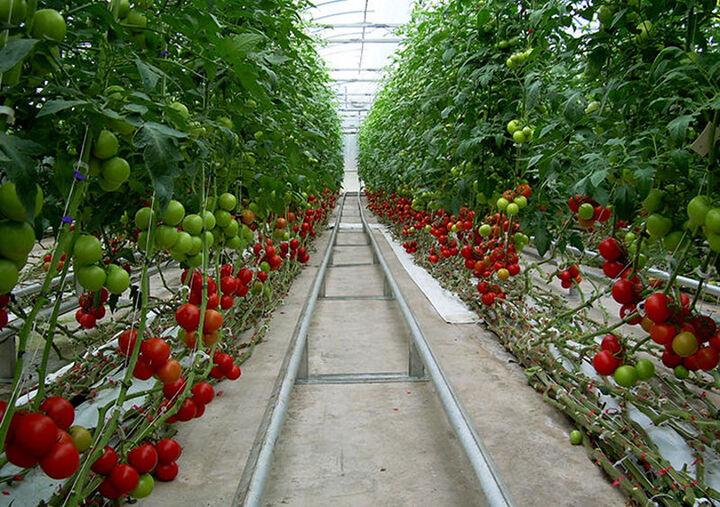 سود تسهیلات کشاورزی رشد چشمگیری دارد/ لزوم حمایت مسئولان از گلخانهداران