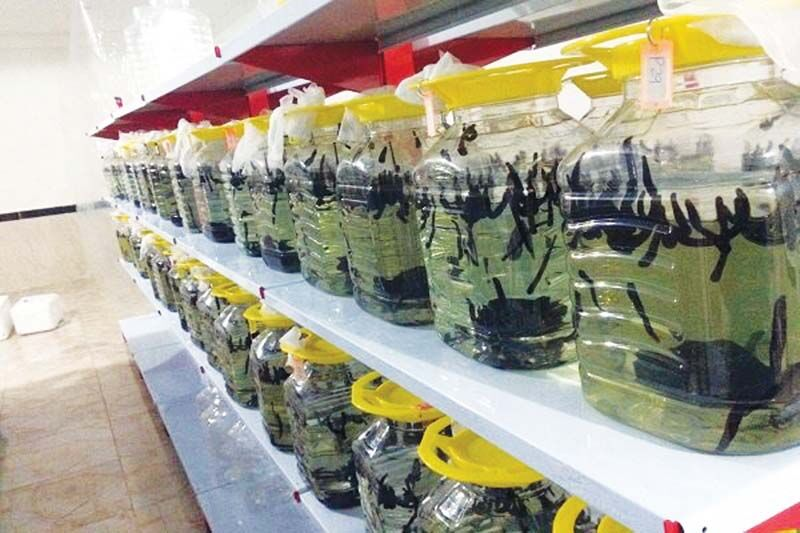 اثر تورم بر قیمت زالو؛ حکایت حشراتی که دلار تولید میکنند