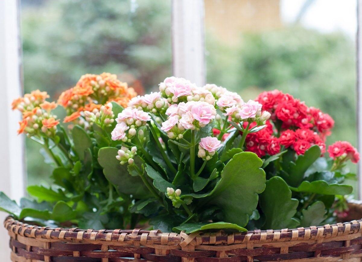 فواید نگهداری گل و گیاه در آپارتمان