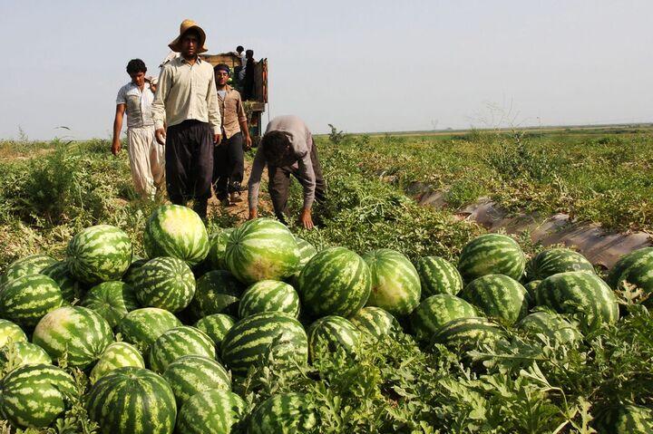 صادرات مجازی آب در سایه خشکسالی  ارزش آبی هر هندوانه ۴۵۰ هزار تومان